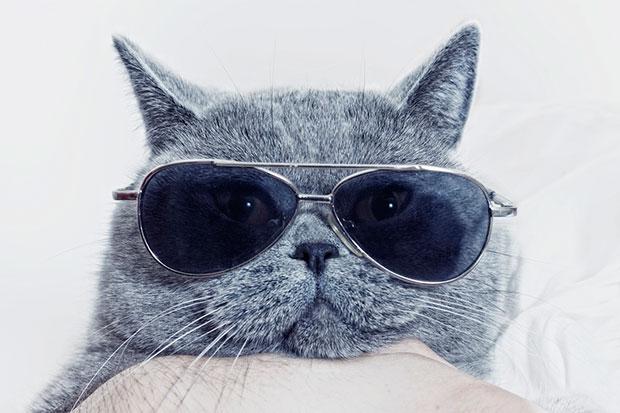รู้หรือไม่ว่าแมวมีบุคลิกภาพแบ่งออกเป็น 5 ประเภท