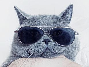 ลักษณะนิสัยของแมว