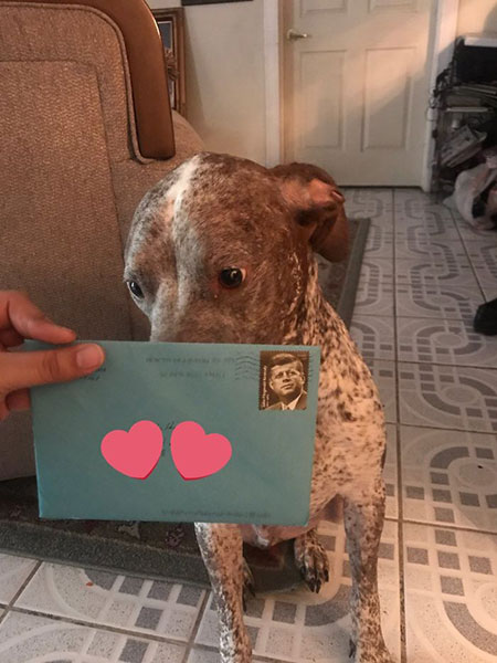แฟนเก่าส่งของขวัญวันเกิดให้สุนัขของพวกเขาทุกปี