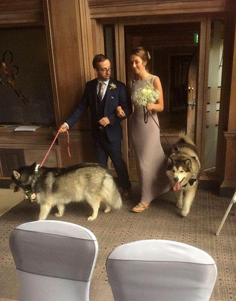 สุนัขมาลามิวท์เป็นเพื่อนเจ้าบ่าวเพื่อนเจ้าสาว