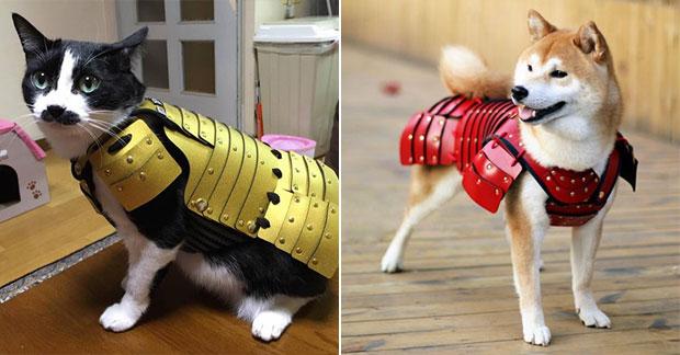 บริษัทญี่ปุ่นผลิตเสื้อเกราะซามูไรสำหรับหมาและแมว