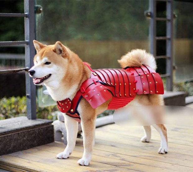 เสื้อเกราะซามูไรสำหรับหมา