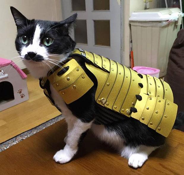เสื้อเกราะซามูไรสำหรับแมว