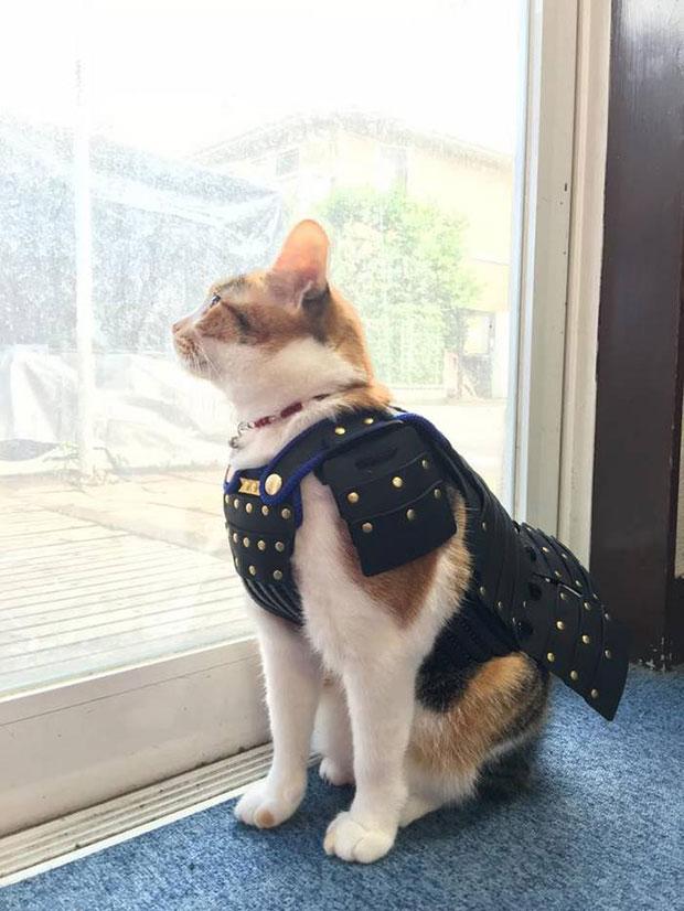 แมวสวมเสื้อเกราะซามูไร