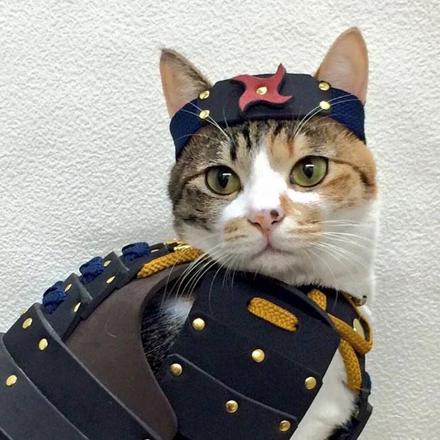 แมวใส่เสื้อเกราะซามูไร