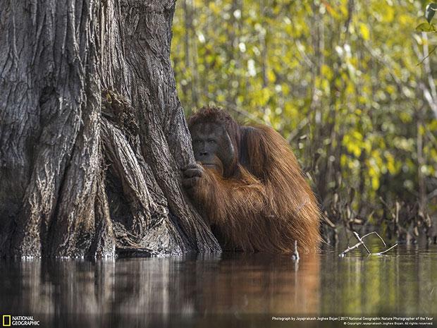 ผู้ชนะรางวัลช่างภาพ National Geographic สายธรรมชาติประจำปี 2017