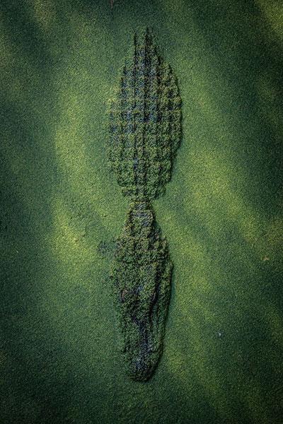 ผู้ชนะรางวัลช่างภาพ National Geographic สายธรรมชาติ
