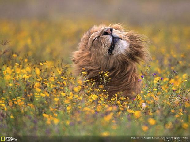 ผู้ชนะรางวัลช่างภาพ National Geographic