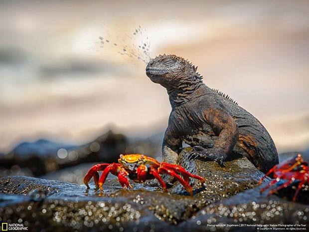 ภาพถ่าย National Geographic สายธรรมชาติ 2017