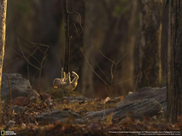 ภาพถ่าย National Geographic 2017