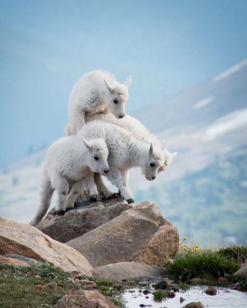 ภาพถ่าย National Geographic