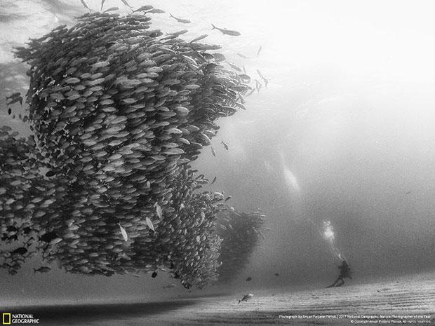 ภาพประกวด National Geographic สายธรรมชาติ 2017
