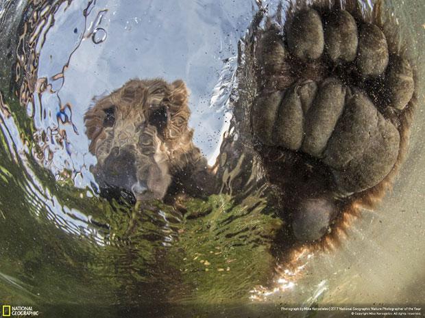 ภาพประกวด National Geographic สายธรรมชาติ