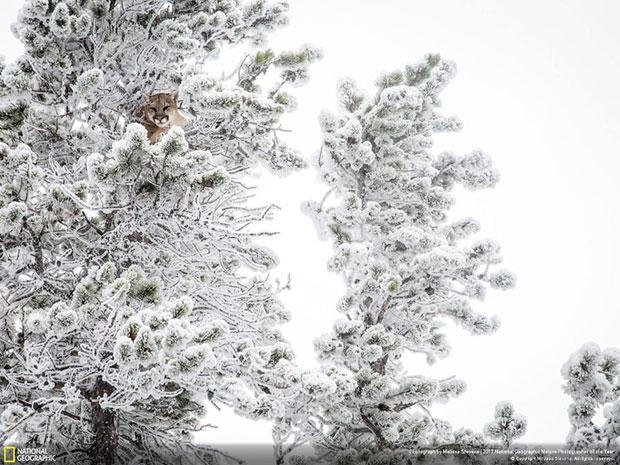 ภาพประกวด National Geographic