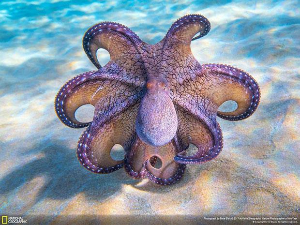 รูปภาพ National Geographic สายธรรมชาติ