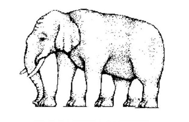 ภาพลวงตา ช้างตัวนี้มีขากี่ขา