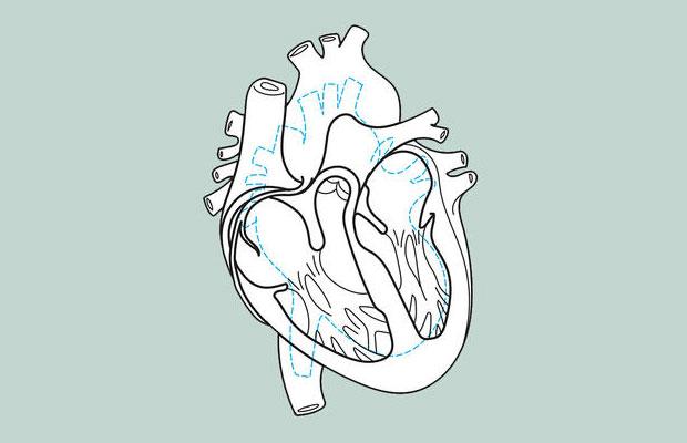 หัวใจของนักวิ่งกับคนทั่วไป