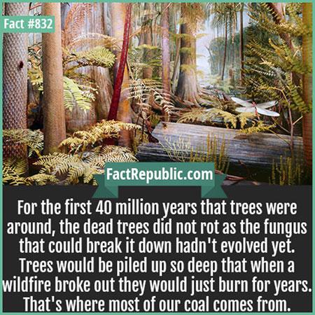 ต้นไม้ที่ตายแล้วก็ไม่ผุพังเนื่องจากยังไม่มีวิวัฒนาการของเห็ดรา