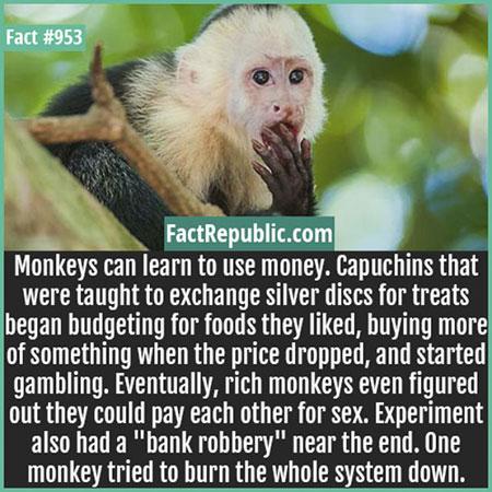ลิงรู้จักใช้เงิน