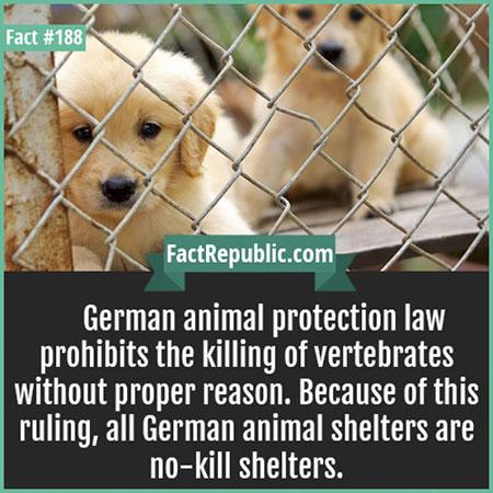 เยอรมนีห้ามฆ่าสัตว์ที่มีกระดูกสันหลัง