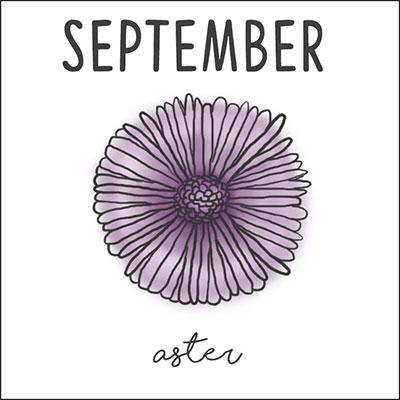 กันยายน ดอกแอสเตอร์