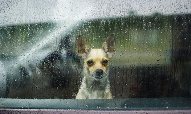 สัตว์เลี้ยงสามารถเป็นโรคซึมเศร้าตามฤดูกาลได้ไหม