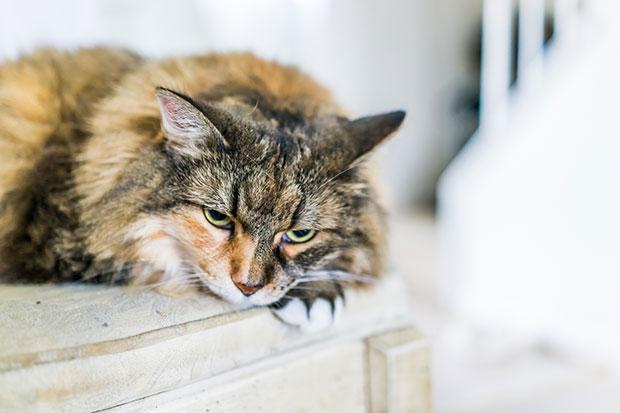 สัตว์เลี้ยงสามารถเป็นโรคซึมเศร้าได้ไหม