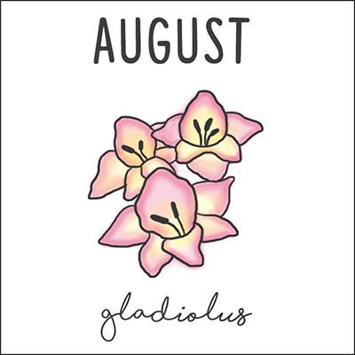 สิงหาคม ดอกแกลดิโอลัส