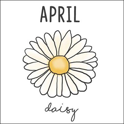 เมษายน ดอกเดซี่