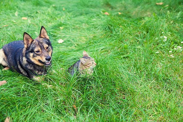 เหตุใดสุนัขจึงกินหญ้า