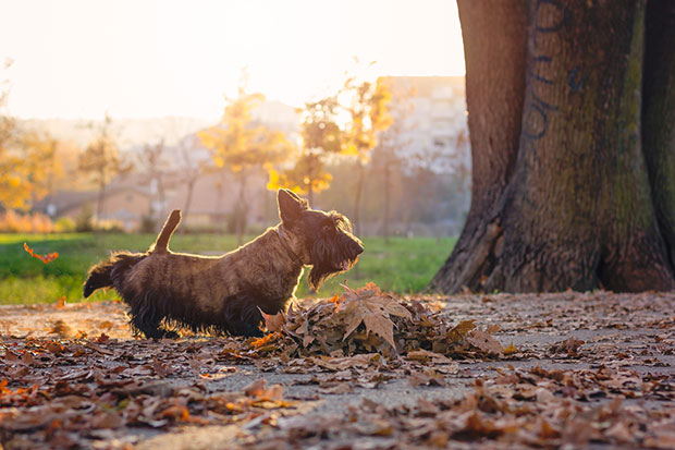 เหตุใดสุนัขต้องใช้ขาเตะไปข้างหลังเมื่ออุจจาระเสร็จ