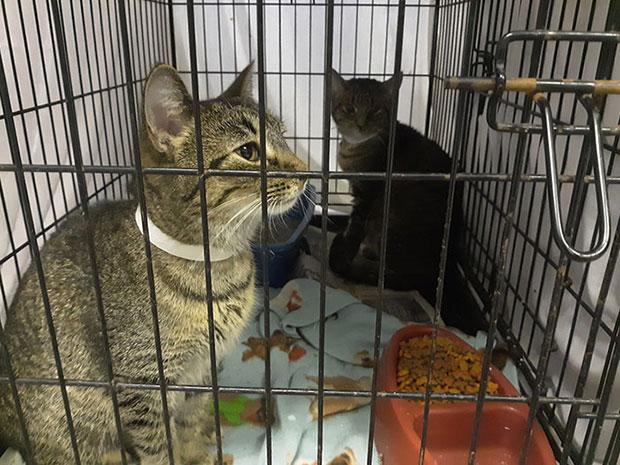 ช่วยเหลือลูกแมวถูกทิ้งแทนการชำระค่าปรับ