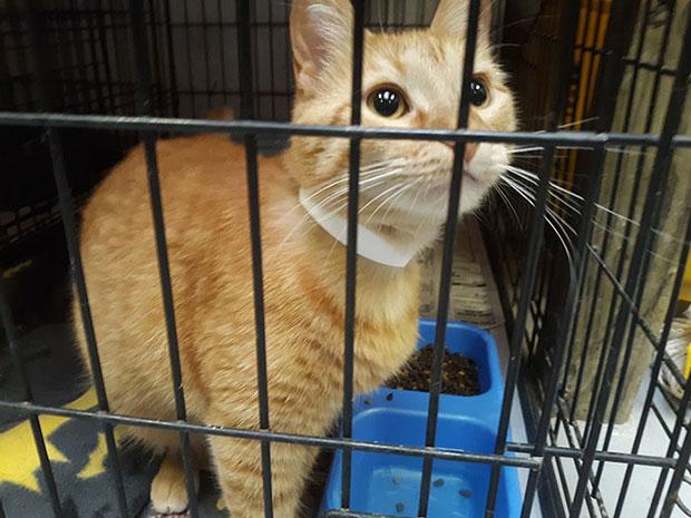 ช่วยแมวแทนการเสียค่าปรับ