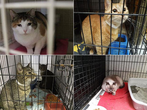 ตำรวจหัวใสให้บริจาคอาหารแมวแทนการเสียค่าปรับ