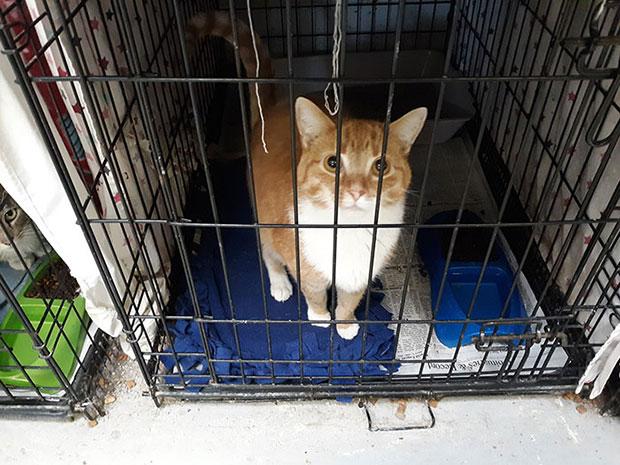 บริจาคอาหารแมวแทนค่าปรับ