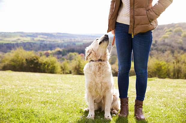 เหตุใดสุนัขมักจะดมเป้าของคุณขณะที่มีประจำเดือน